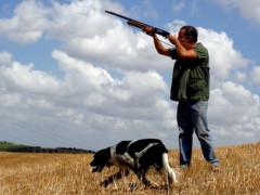 caccia, cacciatori, stagione venatoria