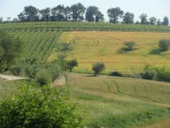 terreno agricolo, campo, coltivazione, campagna