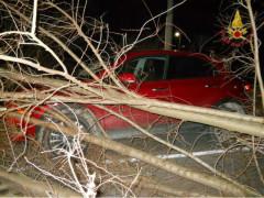 Un albero è caduto sopra un'auto