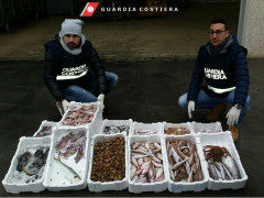 Sequestro prodotti ittici, Guardia Costiera