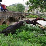 Tronchi sul greto del fiume Potenza