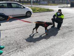 Cane vittima di maltrattamenti sequestro a Tolentino