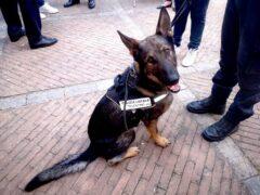 Billy, unità cinofila della Polizia Locale di Tolentino